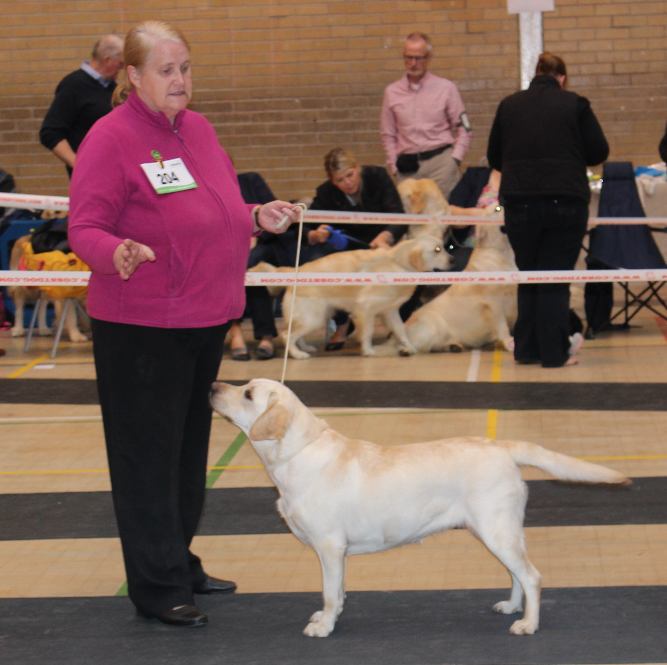 Oswestry And District Canine Society Open Dog Show